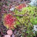 Leili metsalood | Novembri värvilaigud