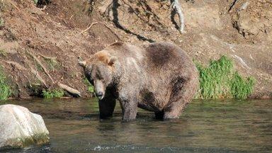 Venemaa poksija suutis kalamehi rünnanud karu noaga tappa