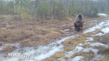 Vanamees ja Karu