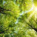 Tänasel leheristipäeval on keelatud okste murdmine, rohu kitkumine ja õite noppimine