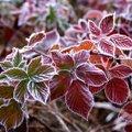 NIPID | Kuidas aidata taimedel üle elada esimesed sügiskülmad?