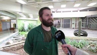 Loomaaia töötaja Erko Kiisel meenutab: Carl on ikka liiga tark, et teda lihtsalt üle kavaldada