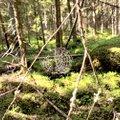 Miks mõne metsa müük kohe kuidagi ei edene?