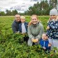 Pärnumaa pere kasvatab oma põldudel haruldast marja, mille vastu on tohutu suur huvi
