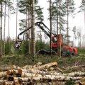 Leili metsalood   Enne kevadist raierahu pumbatakse riigimetsast viimast