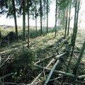 KIIRÜLEVAADE   Palju kära Eesti metsade ümber: kas me raiume liiga agaralt?