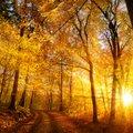 Täna on mihklipäev ehk kasupäev: ennusta inimsaatust ja eeloleva talve ilmasid