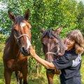 Kati kolis koos hobustega konteinerisse: minu talud on tõusnud osmikutest väepaikadeks