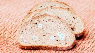 Toidutootjad selgitavad: kas leiba, moosi, jogurtit või suitsuvorsti tohib süüa, kui sellele on tekkinud väike hallitusetäpp?
