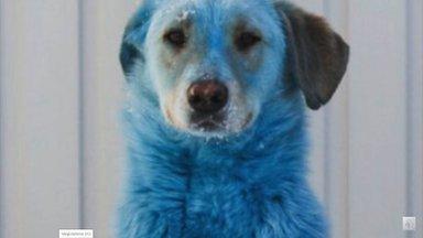 Pankrotistunud keemiavabrik jättis endast maha sinise karvaga koerad