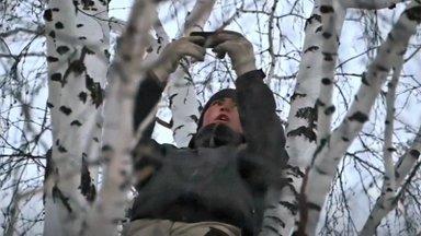 VIDEO | Arvasite, et teil on raske? See noormees peab kooli nimel iga päev kõrge kase otsa ronima