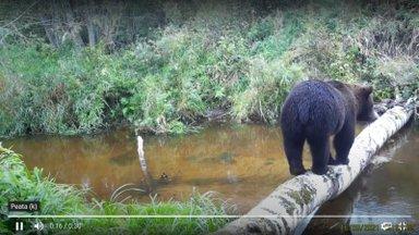 LUGEJA VIDEOD | Jõgevamaal on end mõnusasti sisse seadnud karupere