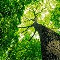 Doktoritöö: lageraie järel hakkab uus mets süsinikku siduma seitsme aastaga