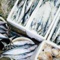Названа рыба, продлевающая жизнь