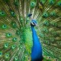 TEST | Haara võimalusest kinni ja vaata, millise looma tuline iseloom sinus peitub?