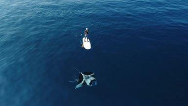 Droonivideo: harukordsed kaadrid maailma suurimast raist näitavad selle majesteetliku liigi ilu