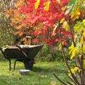 NÕUANDEID │ Millised aiatööd tuleks sügisel kindlasti ära teha?