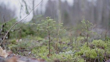 VIDEO | Harvendusraie, hooldusraie ja lageraie: vaata, kuidas metsa majandatakse
