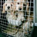 Et reis ei jääks toimumata: 5 tingimust, mis on kohustuslikud lemmikloomaga välisriiki rännates