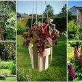 AIAHOOLIK   Ristikumuru, lilletraksid ja hullutavalt lõhnavad suveõhtud