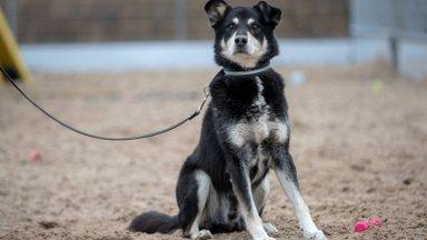 KODULEIDJA | Koer Raffi on uhke ja suursugune härrasmees
