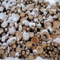 Küttepuidu nōudlus kasvab, kuid hind on all