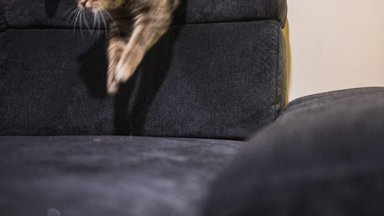 4 nippi lemmikloomaomanikule sobiva üürikodu leidmiseks