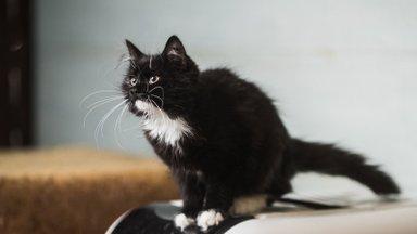 KODULEIDJA   Pikkade valgete vurrudega kassipoeg Achy unistab perekonnast ja kodusoojusest