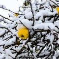 ГЛАВНОЕ ЗА ДЕНЬ: Первый снег в Эстонии и грядущий переход на зимнее время