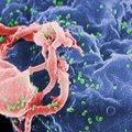 Tapjaviiruste rünnak: kümme kõige enam surma külvavat viirust meie planeedil