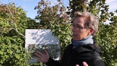 VIDEO   Ameerika tippteadlane käis Eestis linnaaiandust uurimas: omakasvatatud toit aitab ka ülekaalulisuse vastu