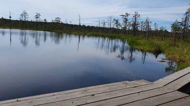 ВИДЕО   Почему в Эстонии популярны походы через болота? Путешествие видеоблогера в Виру