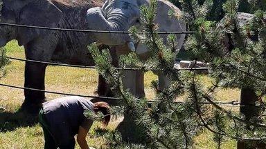 LUGEJA VIDEO   Tallinna loomaaias mängivad elevandid palli
