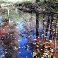 Leili metsalood   Sügis kogub värve ja konnakotka poja hõikeid metsast enam ei kosta