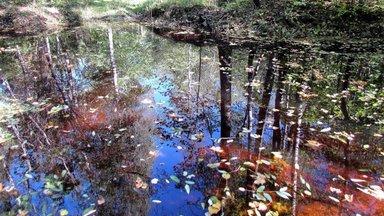 Leili metsalood | Sügis kogub värve ja konnakotka poja hõikeid metsast enam ei kosta