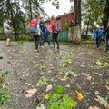 DELFI FOTOD   Pikne tabas Tartu kooli hoovis puud, õpilaste seas puhkes paanika