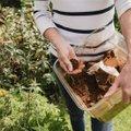 Kohvipaksu aias kasutamise poolt ja vastu. Kas teadsid, et vahel võib see olla lausa kahjulik?