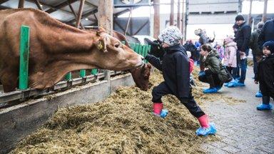 KUULA SAADET | Innovaatika #20: piimandus on Eesti põllumajanduse eredaim täht