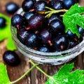 Must sõstar - mõnusa maitse ja paljude tervislike omadustega südasuvine mari
