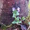 Leili metsalood   Nädalavahetuse ilm tõmbas kenale kevadele pidurit, aga kopsurohi vihma ei pelga