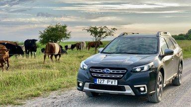 Proovisõit | Uus Subaru Outback on nutikas ja sõidab hiirvaikselt