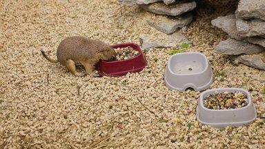 Varjupaik, loomapood või tõuaretaja - kust soetada omale lemmikloom?
