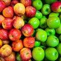 Как полезные яблоки могут навредить