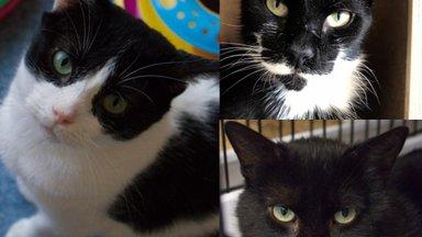 Tomsi, Miska ja Kaspari lugu   kolm isemoodi kassipoissi otsivad endale hoiukodu