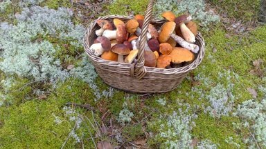 Aegumatud nipid seente külmutamiseks ja kuivatamiseks: kuidas seda teha ja milliste seentega?