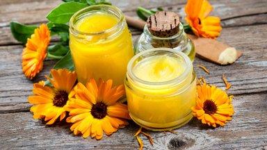 Kuldne saialill - tõhus ravimtaim, mis toob leevendust nii külmetushaiguste kui vähi puhul