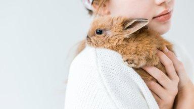 Võit loomadele! Euroopa Parlament toetab loomkatsete lõpetamist