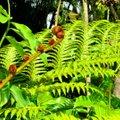 Haruldased sõnajalad: milliseid saab aianduspoodidest osta?