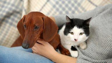 Loomasõbrad kutsuvad täna kõiki loomade väärkohtlemise vastu võitlemiseks Vabaduse väljakule