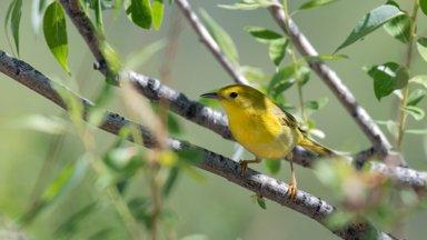 Täna on linnuristipäev: keelatud on maatööd, puude raiumine ja lillede korjamine